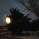 A resident's tree was cut by powerlines incident. (Mylinda LeGrande/City Journals)