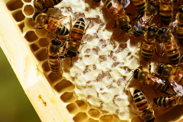 Bees 20on 20honeycomb