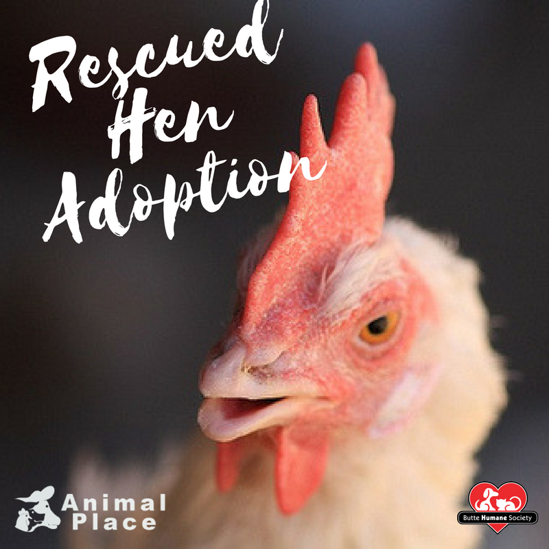 Rescued hen adoption fb graphic