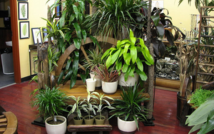 Combat Depression  Anxiety with Houseplants - Feb 24 2017 0217PM