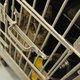 A young kitten stares through the bars. (Keyra Kristoffersen/City Journals)