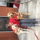 Ali Barnes and her therapy dogs Alta and Jackson (Bill Barnes)