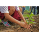 Planting trees for volunteer work. (Pixabay)