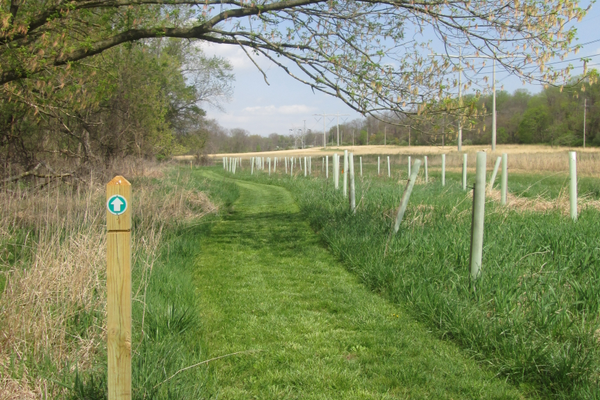 The mowed trail is marked with directional arrows.