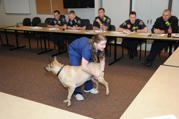 Stephanie Johnson, a veterinary technician from BluePearl Veterinary Partners in Midvale, demonstrates how to check a dog's pulse at a training for West Jordan firefighters. (Reed Scharman/West Jordan Fire Department)