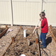 Eric Oler demonstrates how to break up leftover stems with a shovel. (Natalie Conforto/City Journals)