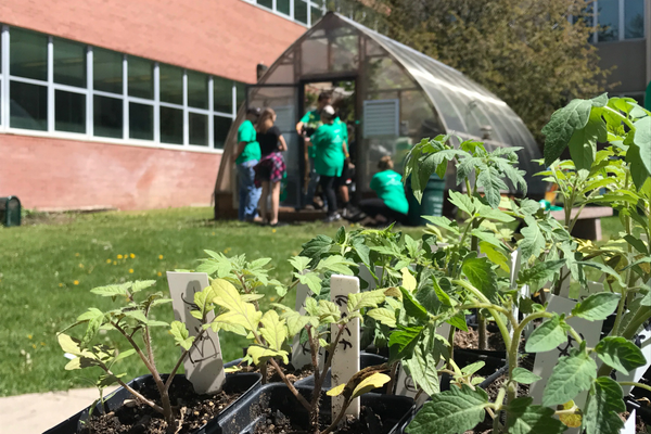 Plants purchased by Comcast were planted for a diversity garden set up in Highland's courtyard. (Natalie Mollinet\City Journals).
