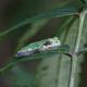 Thumb treefrog.090910.1730