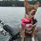 Honey Badger » I adopted Honey Badger in October 2016 after I lost my dog to coyotes. Even though she's blind, she loves being on the water and going fishing with her momma on my kayak. She has made my life whole again.—Autumn Lanni