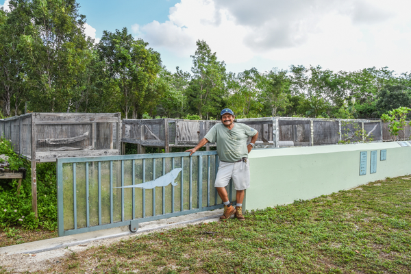 Queen Elizabeth II Botanic Park warden Alberto Estevanovich has helped in restoring Grand Cayman's blue iguana population. Photo by Glenn V. Ostle.