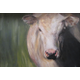 'Holy Cow' by Erica Winne.