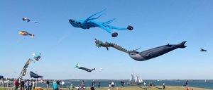 Medium kite 20festival