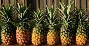 Medium pineapple 8