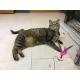 Charlie – this two year old girl is sassy and super active.  She needs a home with an active owner who will play with her constantly and then, when she's done playing, allow her to skulk off to her corner