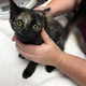 Free Feline Fix is sponsored by Utah FACES and Petsmart Charities. (SL County Animal Services)