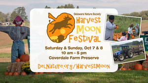 Medium harvestmoonfestival2017