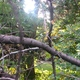 Woodland creature enjoying Holladay's urban forest. (Aspen Perry/City Journals)
