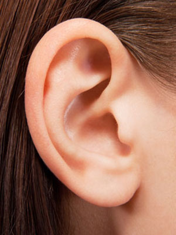54eb698451151   9 things you didn t know about your ears mdn