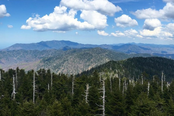 A view from Clingman's Dome, on the North Carolina/Tennessee border.