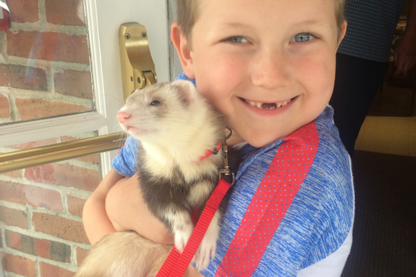 "Alyson – ""Recently adopted Alyson the ferret cuddles with his favorite human, Zachery Carbonneau."" Photo Credit: Jay McFadyen"