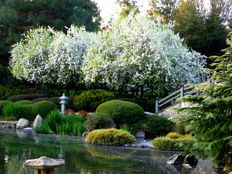 Susana figueroa and the shinzen friendship garden enjoy - Fresno home and garden show 2017 ...