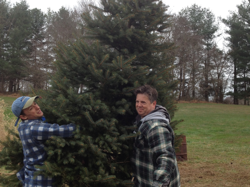 the hilltop christmas tree farm has been selling trees to families in the area for the last 30 years - Hilltop Christmas