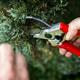 Thumb pruning