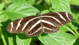 Free Tours of the Tom Allen Memorial Butterfly House - start Nov 03 2017 0800AM