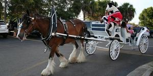 Estero Chick-Fil-A Clydesdales For Christmas - start Dec 15 2017 0500PM
