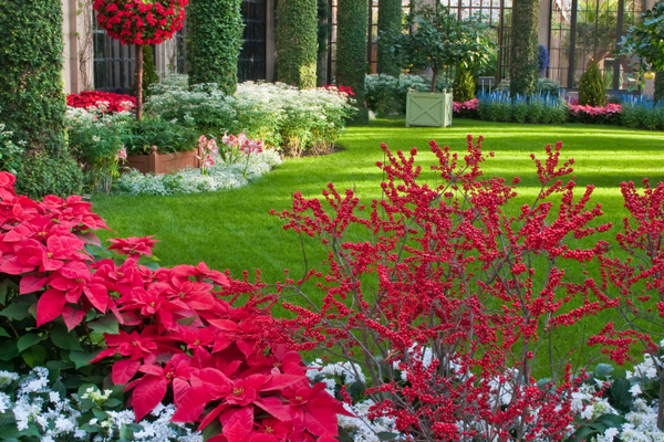 Inside Longwood's Conservatory are 16,000 seasonal plants, including poinsettias, cyclamen and anthurium.