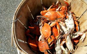 Medium crab