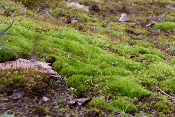 Adventures In Moss Gardening
