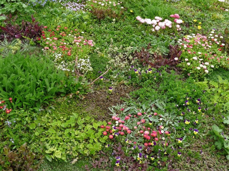 Planting spring flowers how to do it right best of burlington planting spring flowers how to do it right mightylinksfo