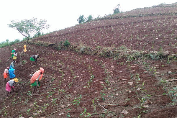 Planting tea at the new farm site. The sustainable farm initiative is intended to help make Snehibhavan self-supporting and to provide local employment.
