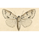 How to Avoid Another Devastating Year of Winter Moth Infestation - Mar 29 2018 0600AM