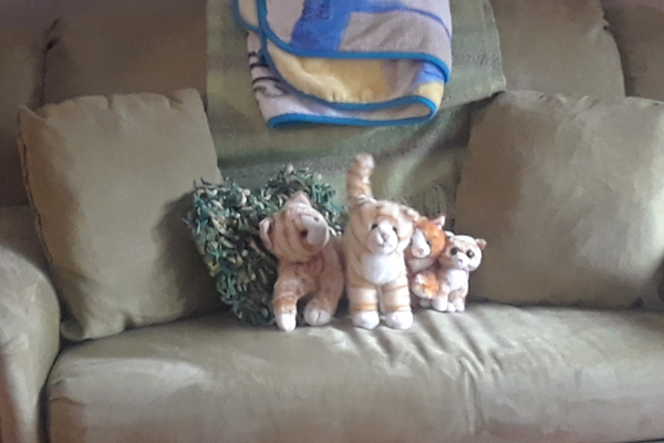 A resident who misses her cat has stuffed animals to keep her company.