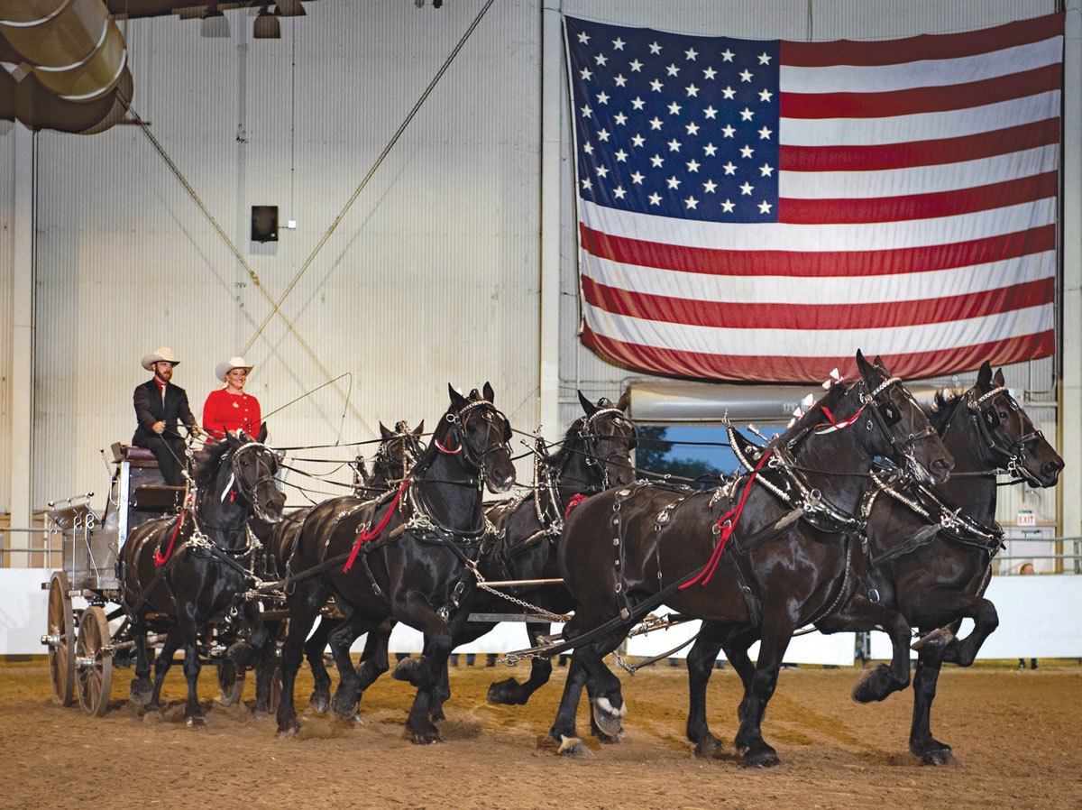 Percherons six horse hitch   whispery pines percherons