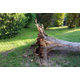 About Wind- and Tree-Related Damage Claims - Apr 27 2018 0600AM