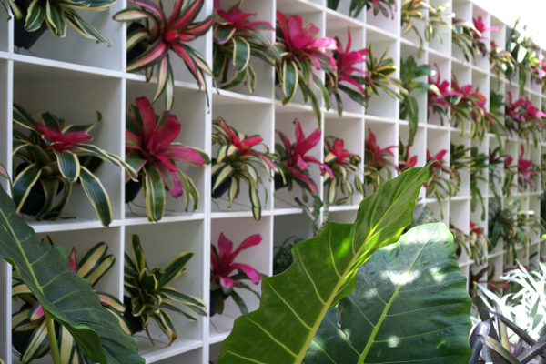 A wall of bromeliads in the conservatory at Marie Selby Botanical Gardens. Photo by Gina Birch.