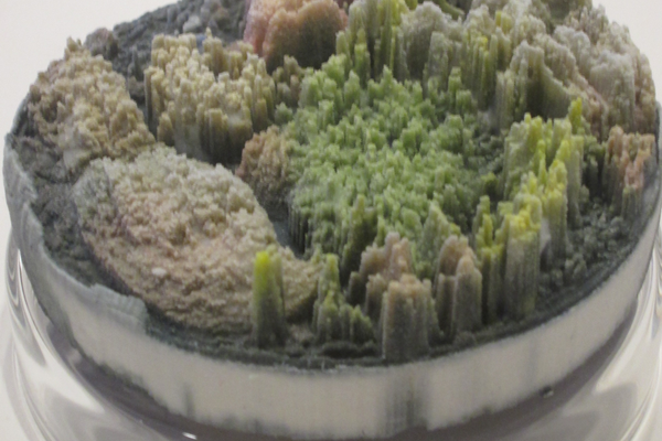 Suzanne Anker's 'Remote Sensing: Micro-Landscapes' (detail).