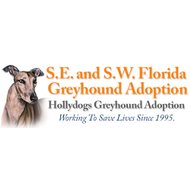 Hollydogsgreyhoundadoption