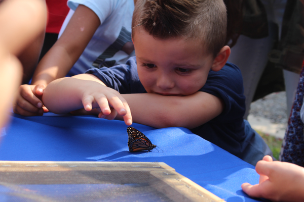 Kids got to learn more about butterflies. They are kept refrigerated prior to the event so they don't dehydrate.