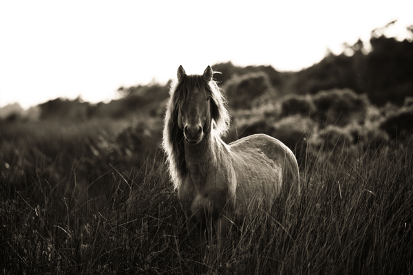 A wild horse, captured by Alessandra Manzotti.