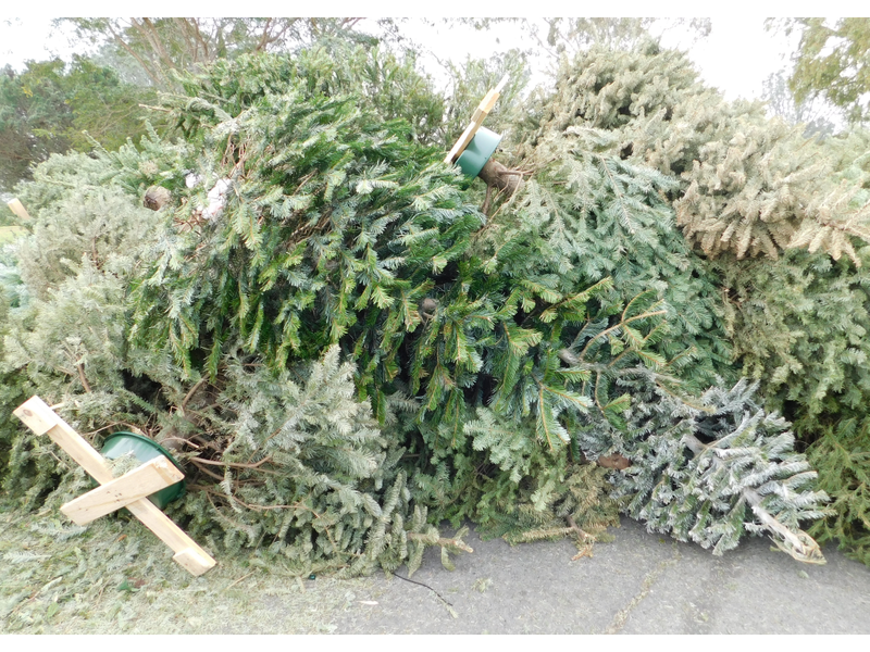 YeahTHATAgenda: Trash Your Christmas Tree, Greenlink Goes