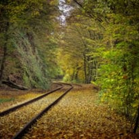Fall railroad tracks and leaves in the forest 800 300x200