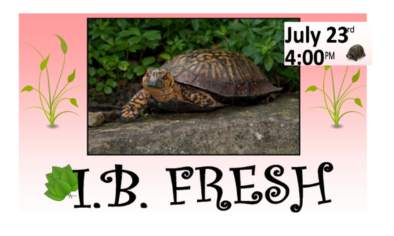 IB Fresh will have Visitors from the San Diego Turtle