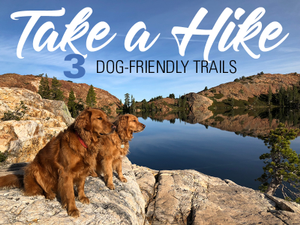 Take a Hike At These 3 Dog-Friendly Trails