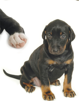 Tips for puppy socialization