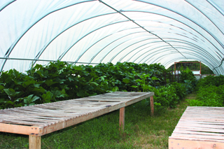 Hoop House Vegetables