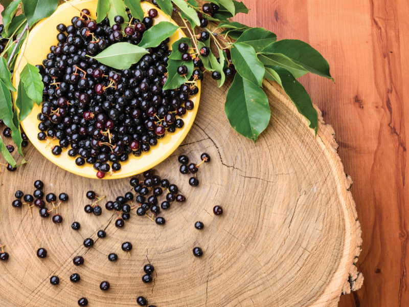 Try Maqui Berry For Dry Eyes Natural Awakenings Magazine